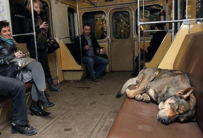 Бездомная собака в России нашла себе удобное место жительства в метро.