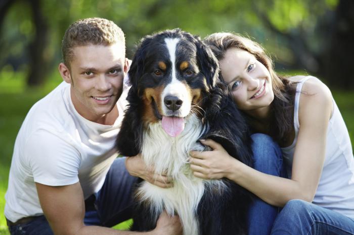 Собаки могут оказаться хорошей находкой для тех, кто хочет найти свою вторую половинку.