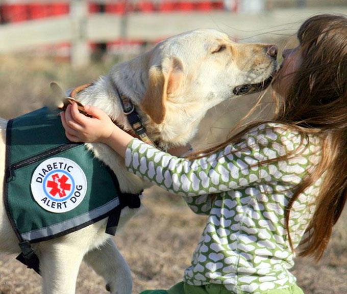 Собак часто назначают в «отряды спасения» для быстрой медицинской помощи.