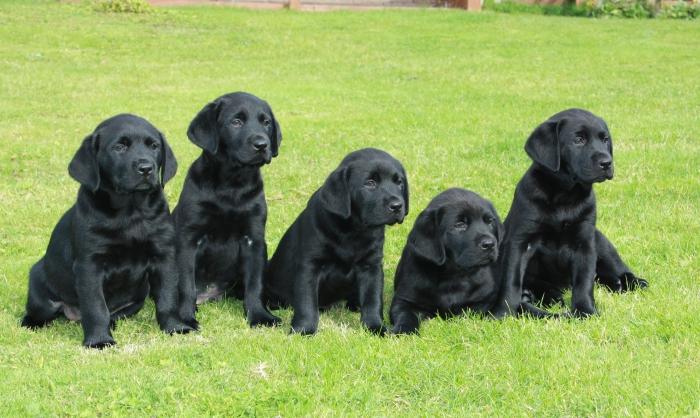 Необычные факты о жизни собак.