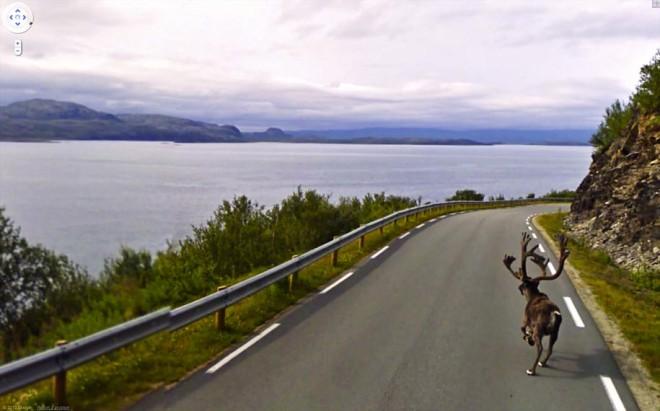 Олень бежит по скоростному шоссе.