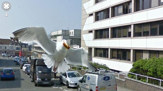 Чайка несет свою добычу в клюве прямо на камеру.