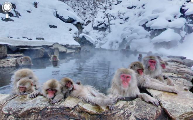 Семья обезьян купаются.