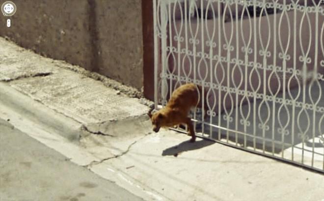 Пес застрял в ограждении.