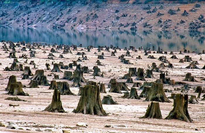 Лес, который был вырублен на 99%.
