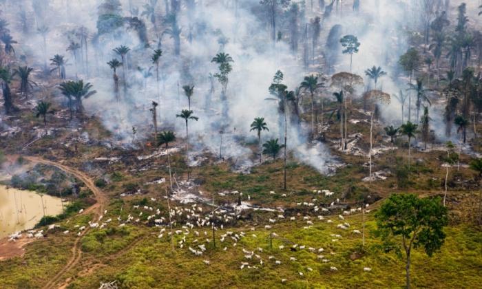 Часть джунглей Амазонки была сожжена для повторного использования.