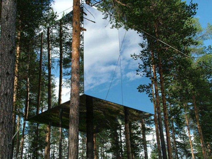 Известная постройка на дереве.