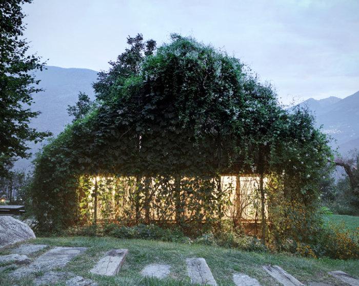 Гараж, полностью покрытый вьющимися растениями.