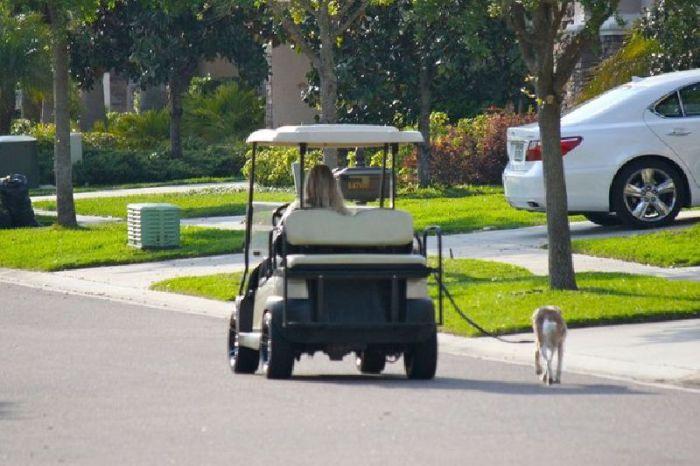 Выгул собаки еще никогда не был таким простым и приятным.