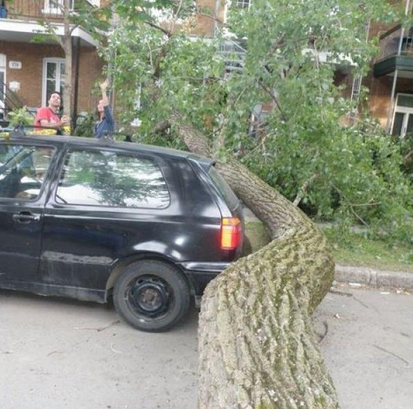 Дерево, ствол которого в точности повторял очертания припаркованного под ним автомобиля.