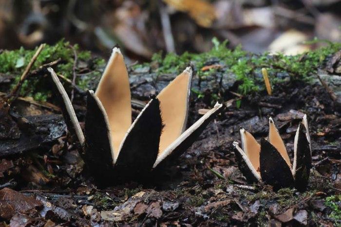 Самый редкий в мире гриб.