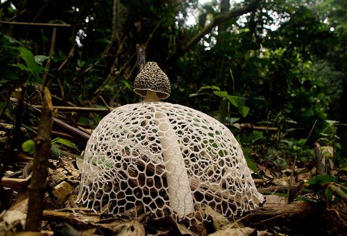 Удивительные грибы семейства Весёлковых.