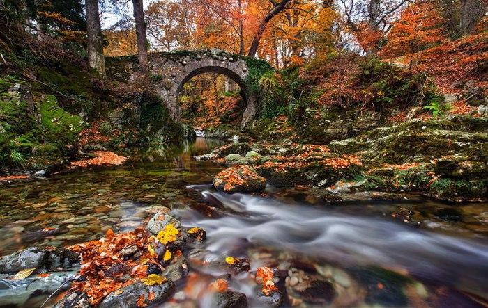 Старий порослий мохом міст у парку Толлімор.