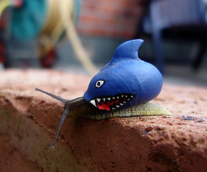 Раковина улитки в виде акулы.