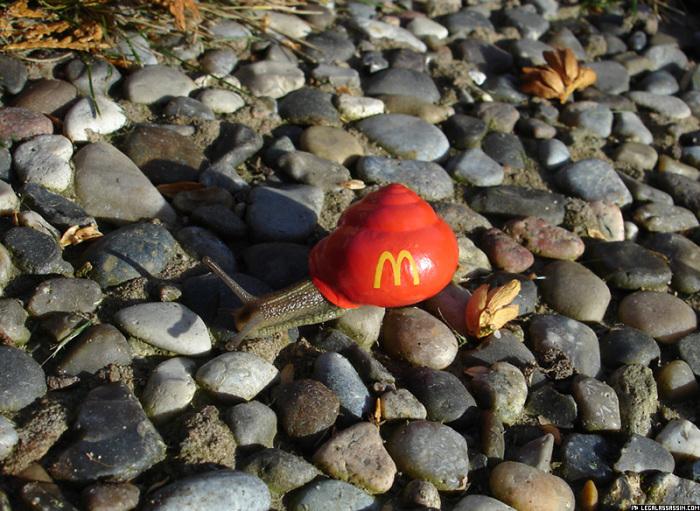 Реклама сети ресторанов быстрого питания Macdonald's на ракушке улитки.