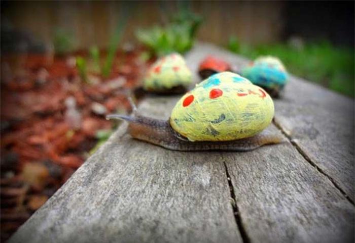 Разноцветные ракушки улиток.