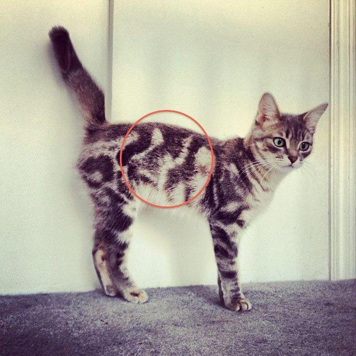 Необыкновенный кот-нарцисс.