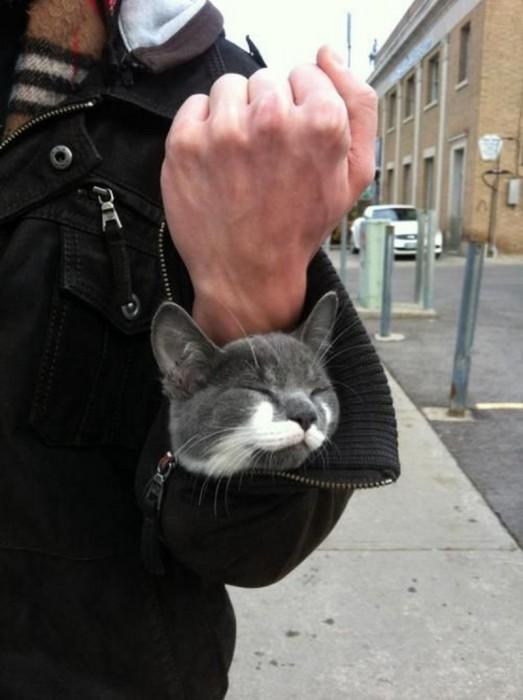 Искренне любящий своего хозяина кот.