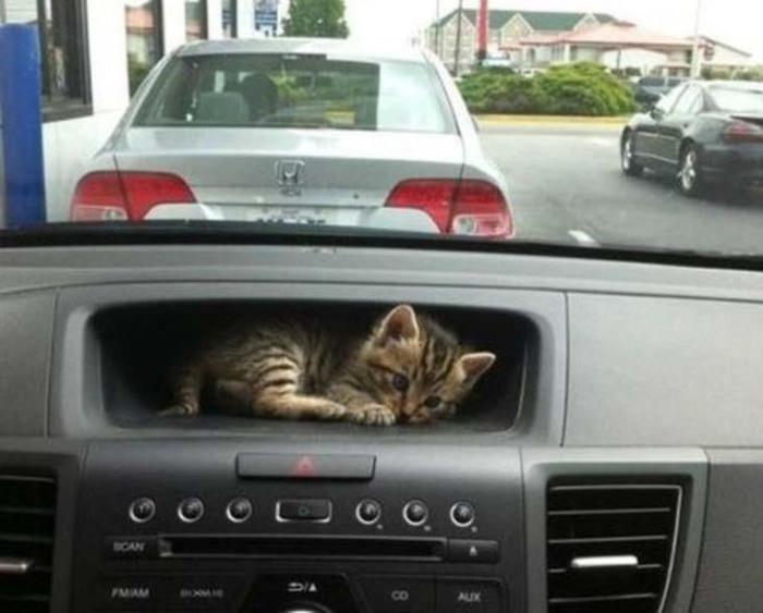 Специальное место для перевозки котят в автомобиле.