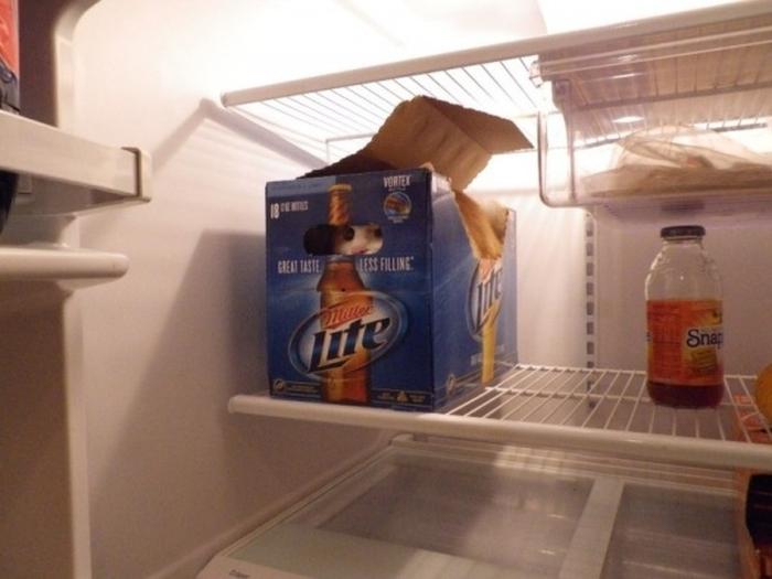 Храбрый защитник пива всегда на страже.