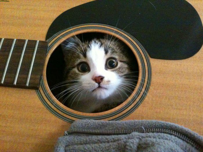 Кот, который не прочь поиграть на шести струнах.