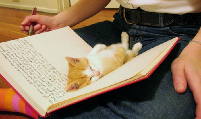 Самые неожиданные места для кошачьего сна.