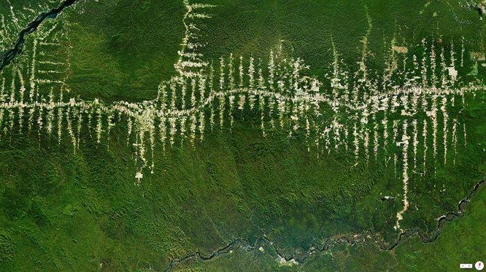 Вырубка лесов Амазонки.