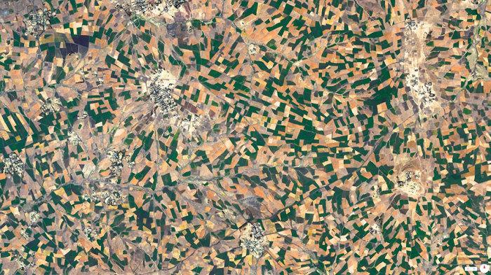 Развитие сельского хозяйства в Эфиопии.