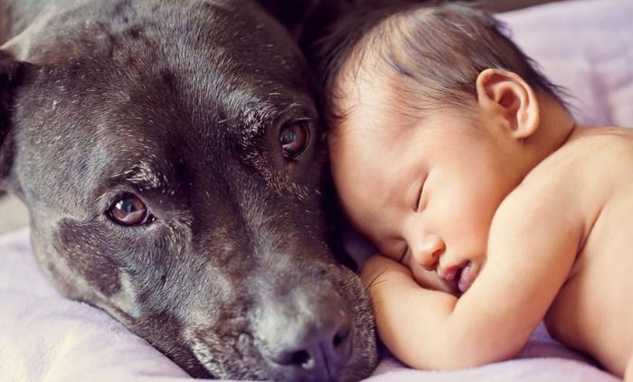 Тихий час ребенка и собаки.