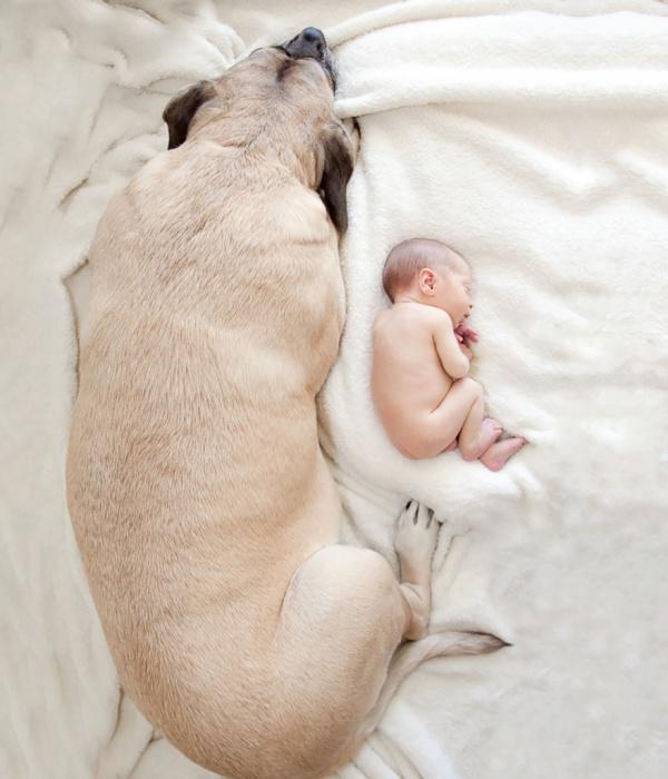 Большая собака и маленький человек.