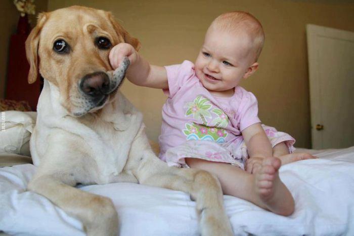 Веселые игры с собакой.