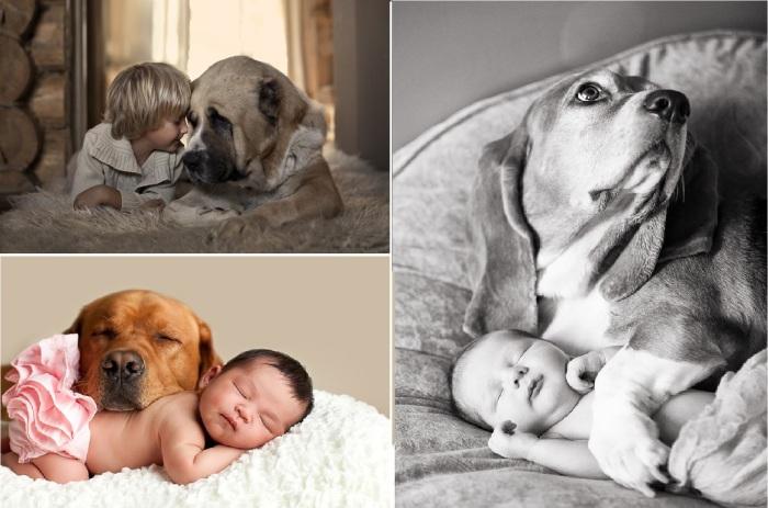 15 снимков собак и младенцев, вызывающих умиление.
