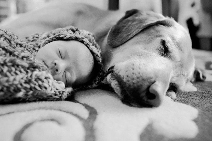 Сон ребенка и собаки.