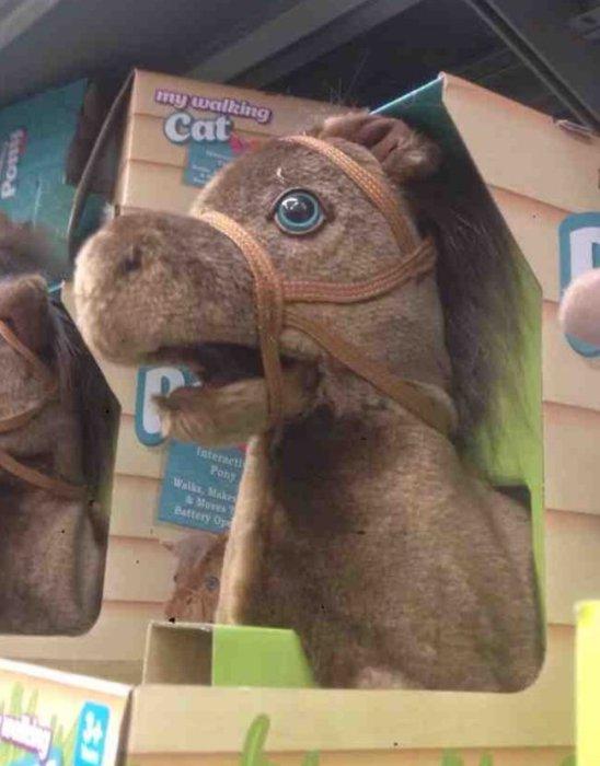 Самая удивленная в мире лошадка.