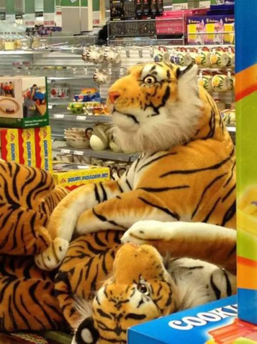 Тигр с очень большими глазами.