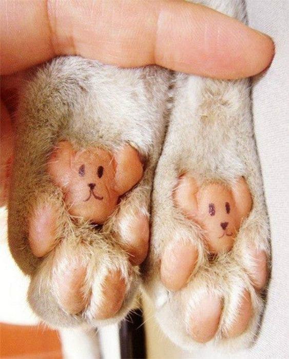 Подушечки лап кошки сильно похожи на маленьких мишек Тедди.