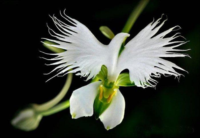 Цветок, похожий на птицу.