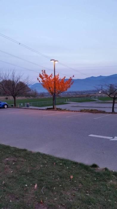 Дерево, которое забыло о перемене во времени года.