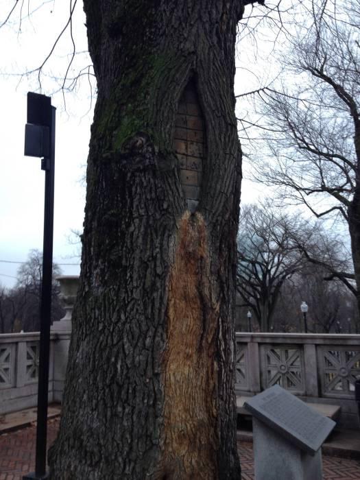 Дерево, питающее свою жизненную силу из стройматериалов.