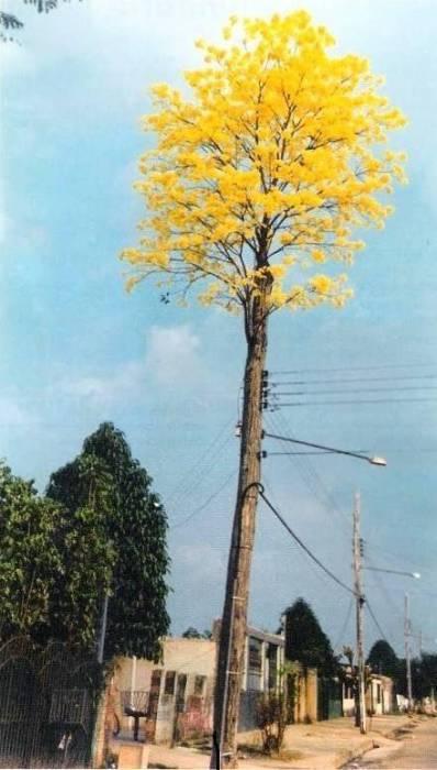 Даже обычный электрический столб раз в сто лет может расцвести.