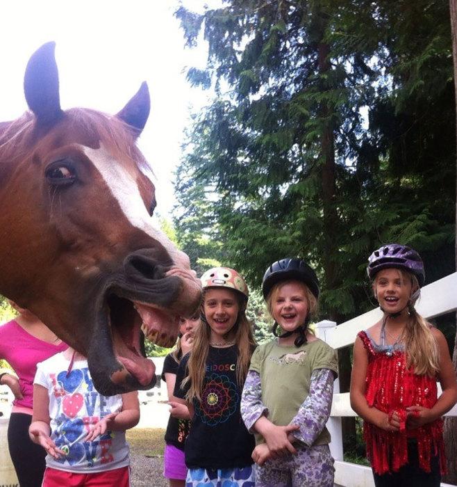 Лошади сильно гордятся своей идеально ровной улыбкой,поэтому они никогда не упускают шанс вдоволь насмеяться.