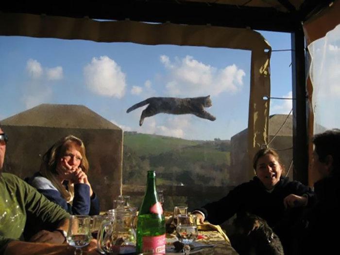 Сложно предствавить как эта кошка смогла  научиться летать.