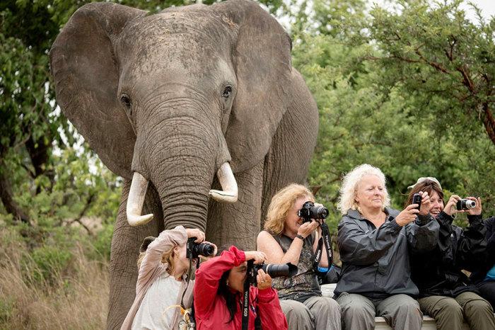Иногда можно не заметить целого слона.