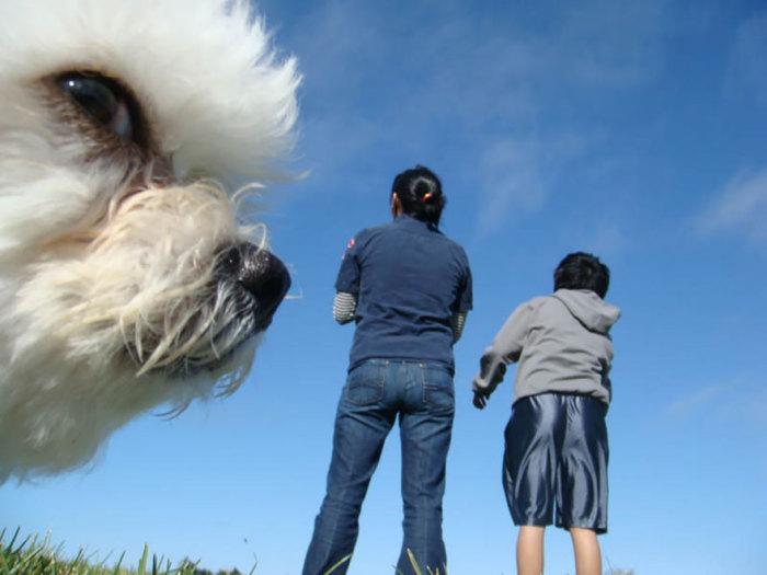 Этот щенок явно задумал что-то неладное.