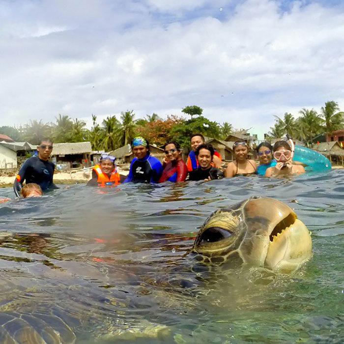Смешная черепаха на переднем плане.