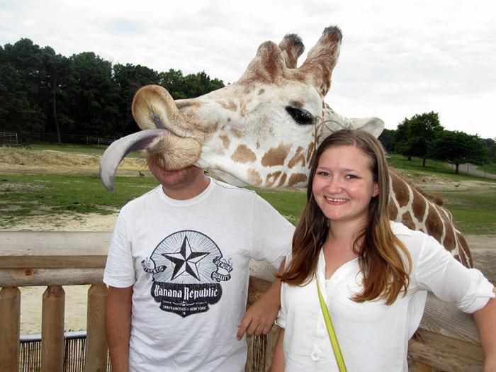 Жирафам тоже хочется быть в центре внимания.