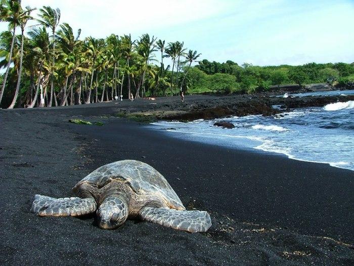 Черный песок на пляже Паналулу на Гавайях.