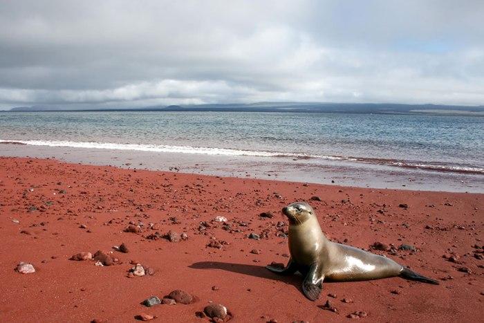 Красный пляж Рабида.