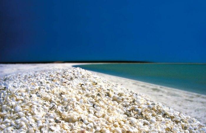 Множество моллюсков Акульей бухты в Австралии были съедены хищниками. Отсюда и большое количество ракушек на пляже.