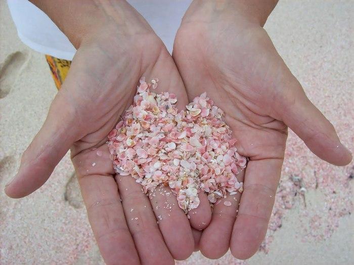 Розовый песок из кораллов, раздробленных волнами.